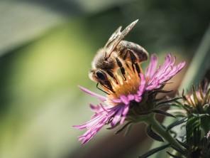 Pyłek Kwiatowy zwany Pszczelim