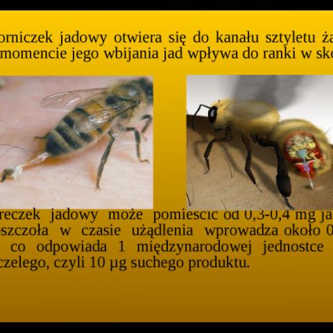 Pszczele produkty